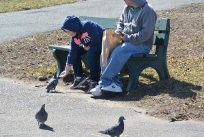 Pigeon Feeding, the Hand Out by Miss-Tbones