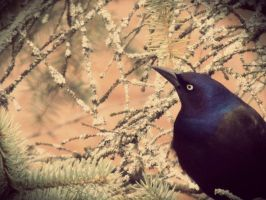 Black bird by lawlerbum