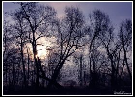 Mourning Trees by crazyIvan969