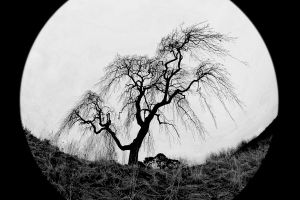 Tree by Criee