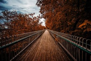 Fall... by IgorGlavas
