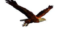 open it! its a eagle by catrin1