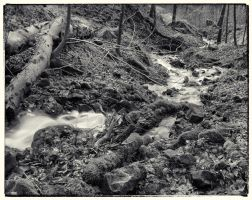 Trees and Stones 07 by HorstSchmier