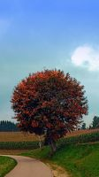 Blushing tree in shame by patrickjobst