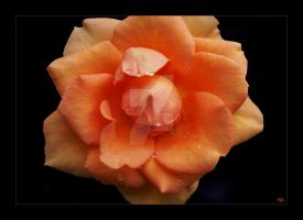 Flower Mb39 by alfa