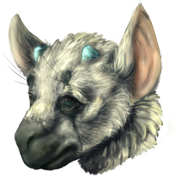 Trico by Dagernice