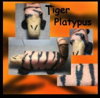 meet Tiger Pus fetly by Fallonkyra