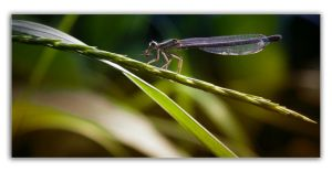 Dragonfly Catch by daniphoto