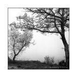 Fog and Trees by PicTd
