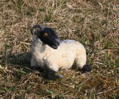 Needle felted poseable Sheep by Sofakitty