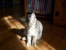 Kitten hit by sunlight by MsShinagami1994
