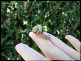 Snail by Maria-92