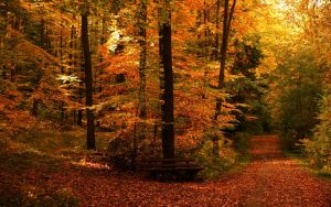 Autumn Paths Wallpaper by JoInnovate