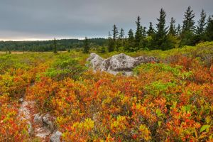 Cloudy Dolly Sods by somadjinn