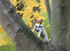 Jack Russel on a tree by ArtOfPedL