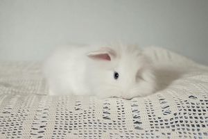 Lumi the bunny by RobinHedberg