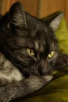 Tabby says leave her alone by moiret