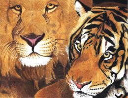 A Tiger and A Lion by Knuczema-the-Echidna