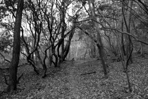 creepy black and white forest by rayna23