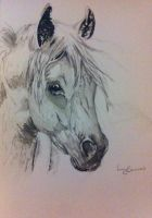 A5 watercolour horse by 12LucyJ34