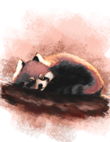 Red Panda by o0Mythius0o