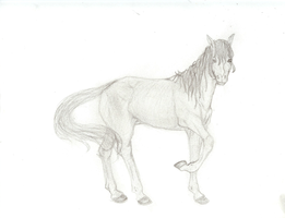 Horse :D by archangel1012345