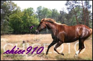 Chestnut galloping by HoofBeat-Graphics