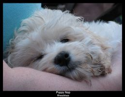Puppy Nap by FicktionPhotography
