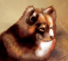 Lapphund - Lapinkoira by valurauta