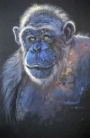 The Old Chimp by HouseofChabrier