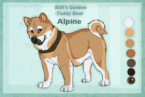 BSK's Golden Teddy Bear by WagginKennelClub