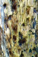 Stock Texture - Rotten Wood VII by rockgem