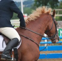 Buster - Showjumping by equinestudios