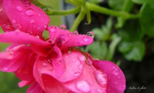 rain in May by andi40