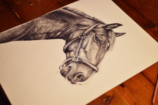 Horse on graphite by Lmk-Arts