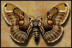 Brahmin Moth by Nameda