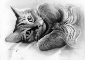 Alice cat drawing by roni-yoffe