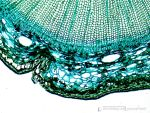 Microscope photography by pastedTOAST