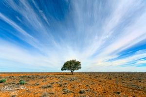 Stand Out by FireflyPhotosAust