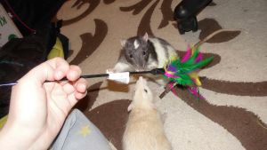 Rats and cat toy 3 by OP-Girl16