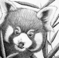 Red Panda Inking by bloominglove