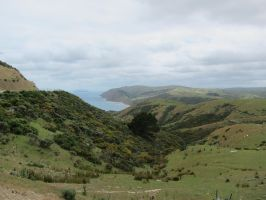 Makara, New Zealand by God-KingTaupo