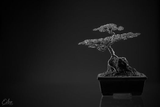Bonsai 1 by Eibography