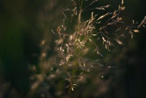 constelation vegetal by dragonfly928