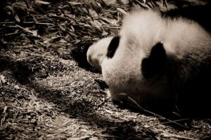 The Zoo 17 by dspittard