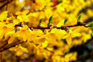 Sprouting Yellow by Green-snail
