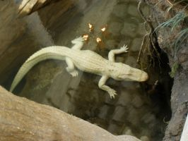 Pale as the Gator Moon by TheCreationist