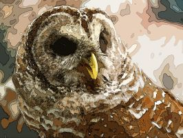 rescued spotted owl by hummingbbird