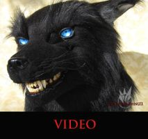 Black wolf video by MissRaptor