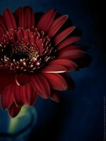 A Flower. by Proseuche